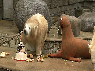 Raw: Bear gets cake, toy walrus for 1st birthday