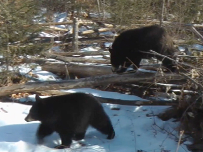 Bear of a winter: These cubs cannot sleep