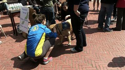 Therapeutic dogs comfort Boston after blasts