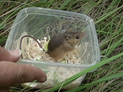 From zoo to little mice on the prairie