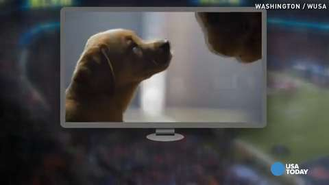 'Puppy Love' wins 2014 Super Bowl Ad Meter