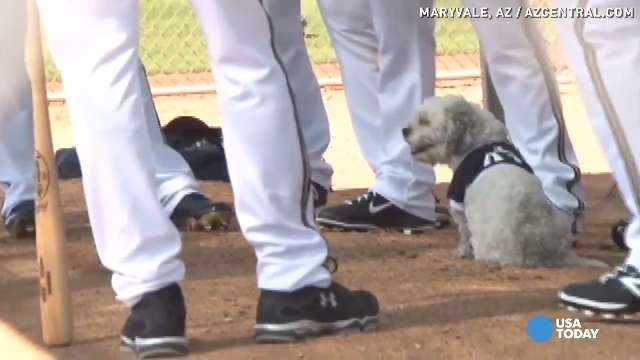 Hank the stray dog ready to play ball with Brewers