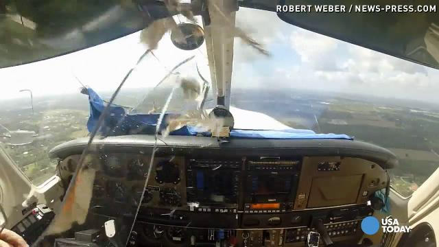 Video captures moment bird smashes through plane w...