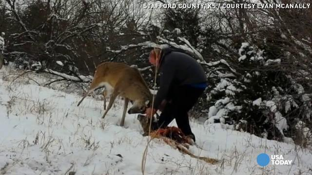 Hunter frees buck whose antlers got locked with ca...