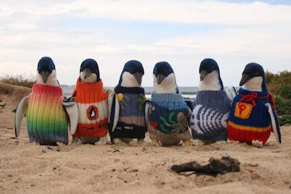 Knitted jumpers help save penguins