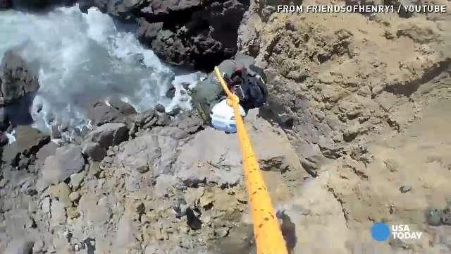 Helicopter swoops in to rescue dog from cliff