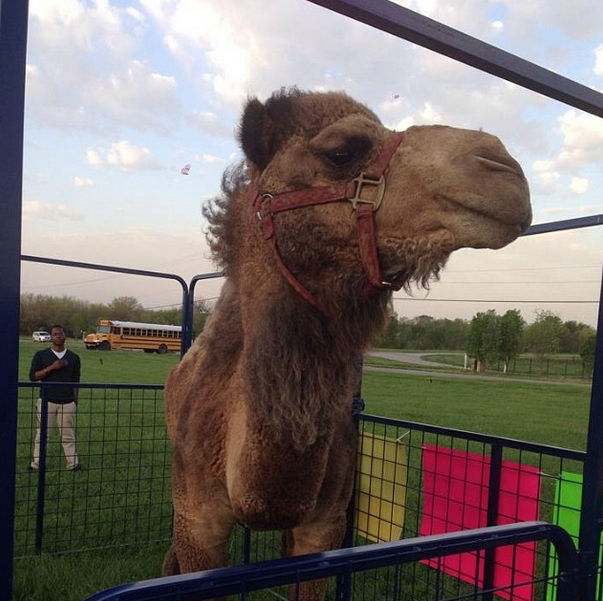 Mariachi, Camels, Cars: Pranksters keep it classy