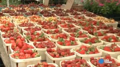 New York City's flagship farmers market is a foodie paradise