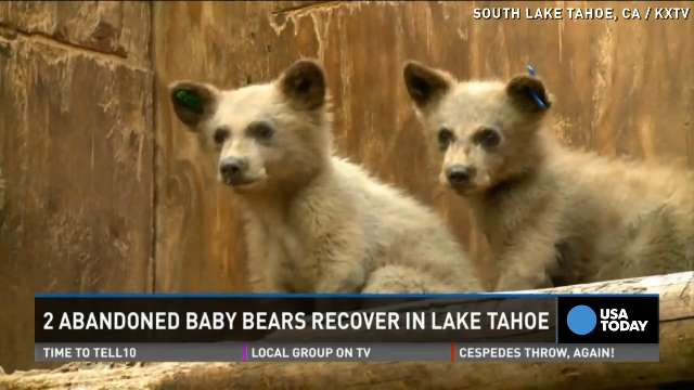 Two abandoned bear cubs get second chance at life