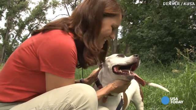 Family gives bucket list to dying rescue dog