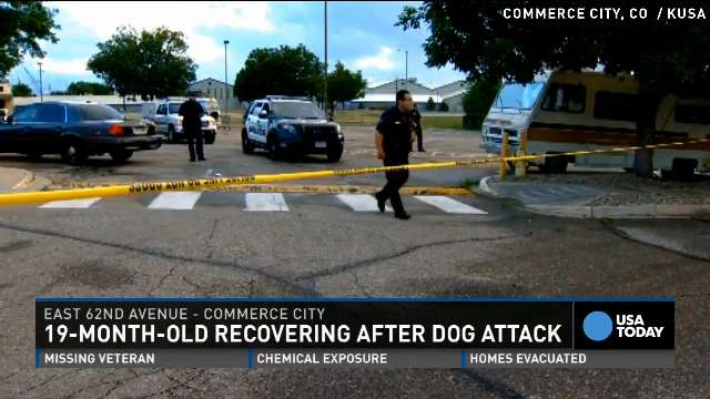 Colo. toddler mauled trying to hug pit bull dog