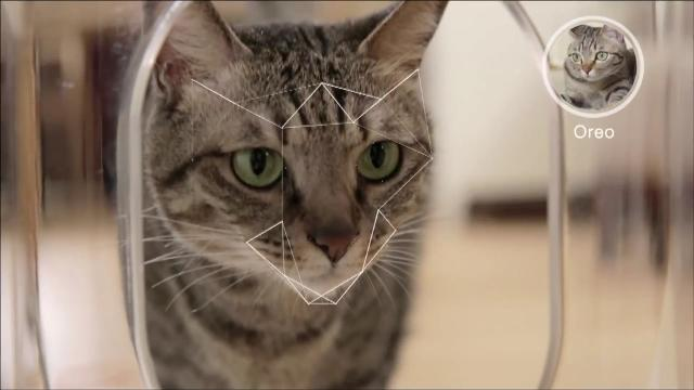 Cat feeder uses facial recognition software