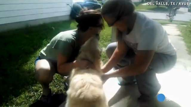 Dog missing for a year found by Good Samaritans