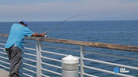 Sharks vs swimmers means 39 no fishing 39 for How is fishing today