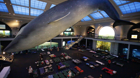 The American Museum of Natural History will again host its wildly popular adults-only sleepover adventure. Built on the successful A Night at the Museum sleepover program, adults ages 21 and up will enjoy a more sophisticated version of the popular event.