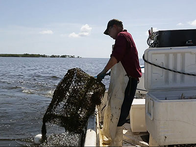 Proposed ban on commercial fishing off Miami