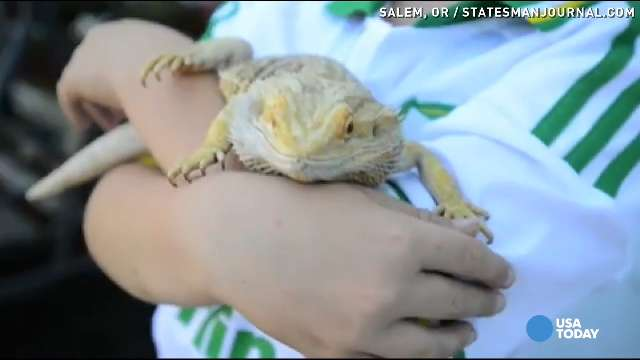 Grandma saves grandson's bearded dragon with CPR
