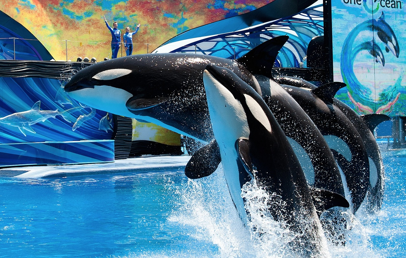 SeaWorld upgrades killer whale habitats amid controversy