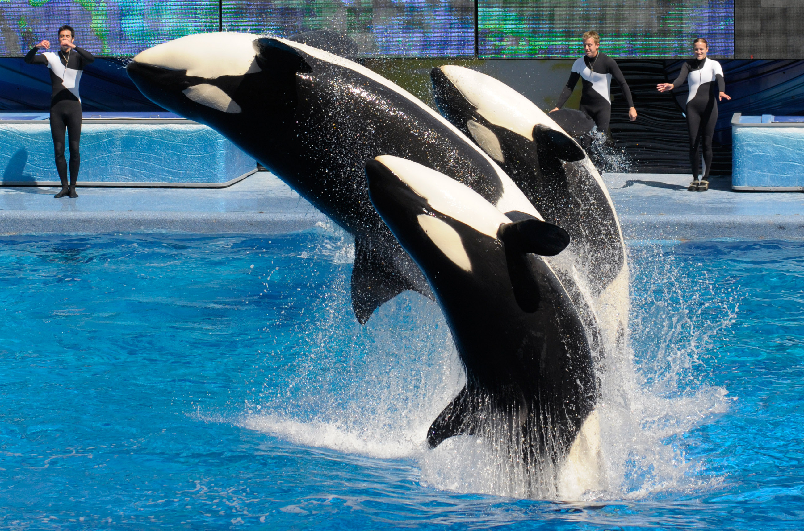 SeaWorld ruling bars trainers from swimming with whales