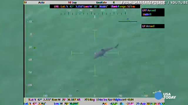 Chopper spots great white shark swimming near shore