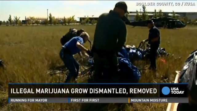 Army chopper helps seize hundreds of pot plants