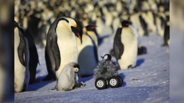 Scientists spy on real penguins with robot