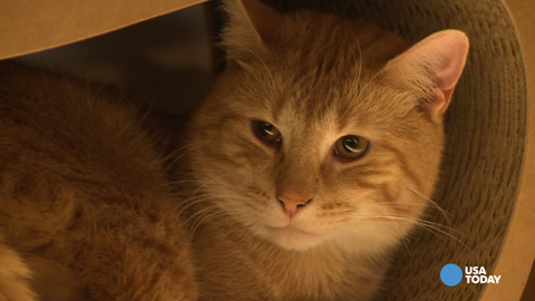 NYC gets its first cat café: A purrfect place for cat lovers