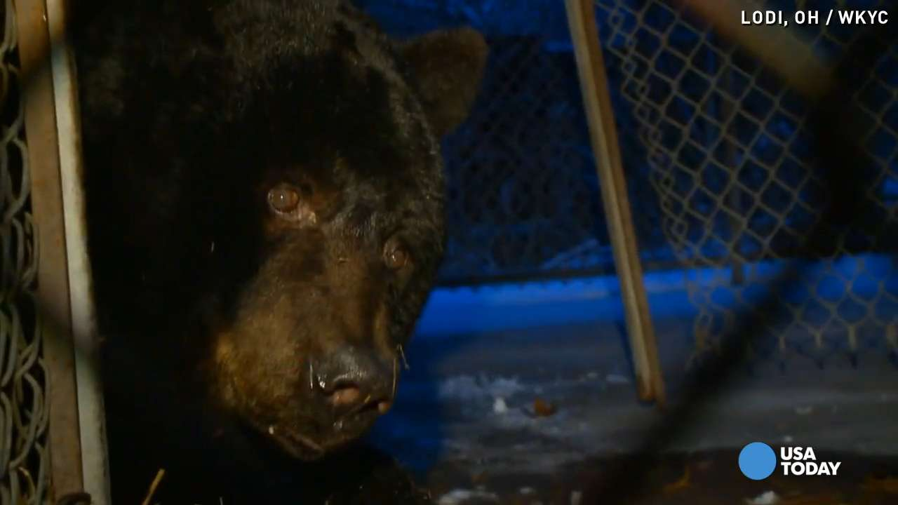 ohio couple told to give up 39 year old pet bear