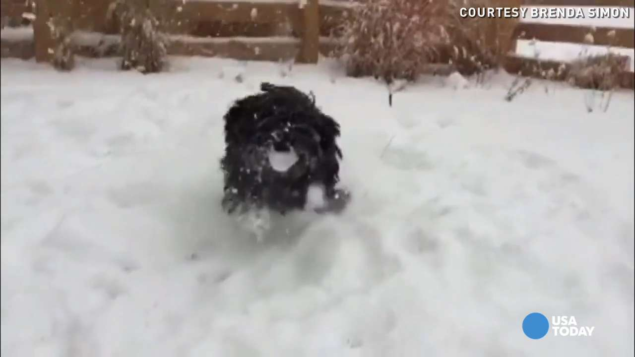 This dog frolicking in slow-mo is the cutest thing ever