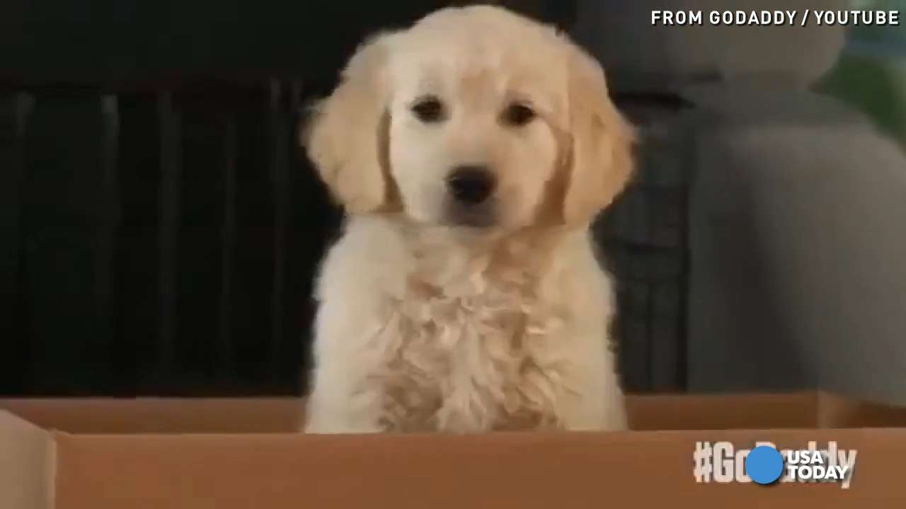 GoDaddy's 'despicable' puppy ad pulled from Super Bowl
