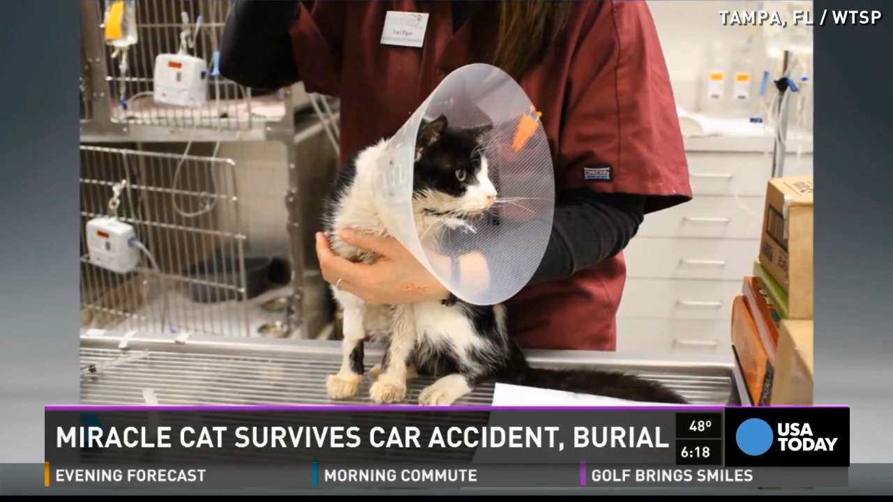 hit by a car and buried bart the cat showed up in a neighbor 39 s yard
