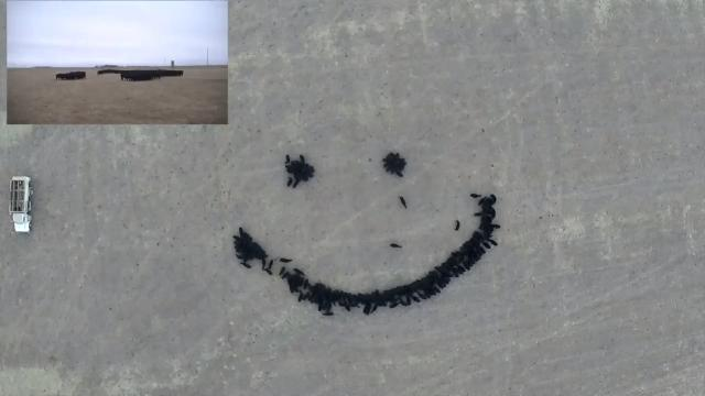 Farmer uses feed and drones to create amazing 'Cow Art'