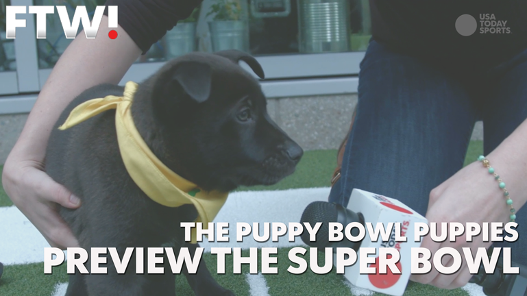 Puppy Bowl puppies preview the Super Bowl