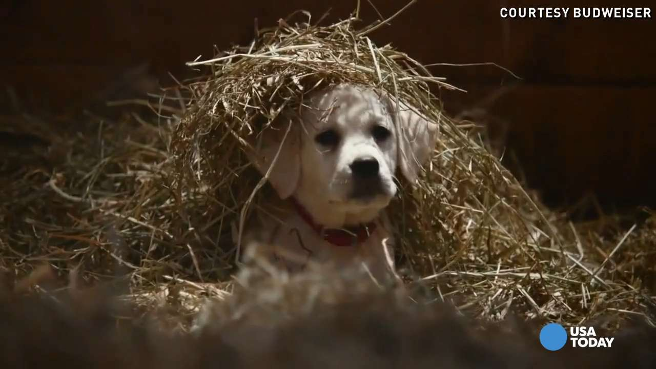 These are the Super Bowl ads everyone's talking about