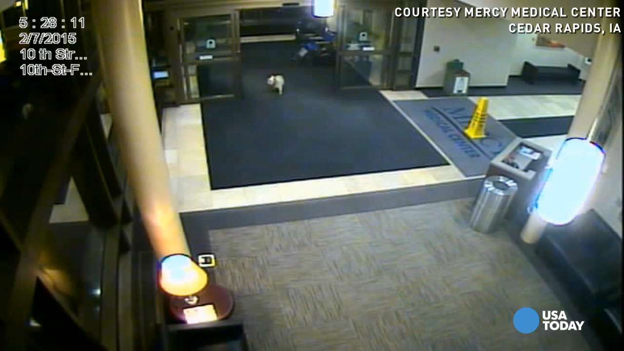 Dog walks nearly 20 blocks to see owner in hospital