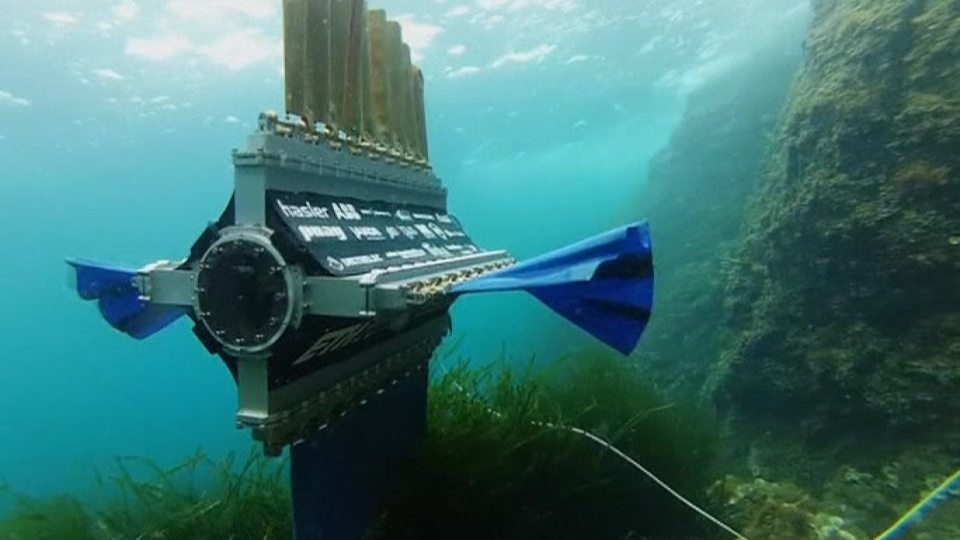 Sepios the robot cuttlefish takes to the sea