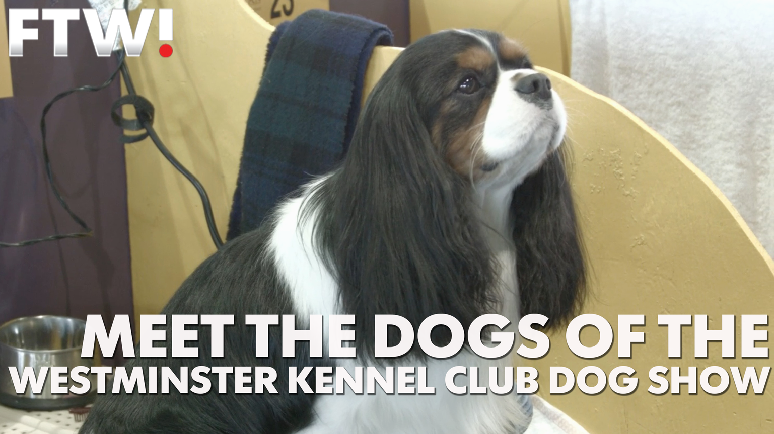 Meet the many dogs competing at Westminster