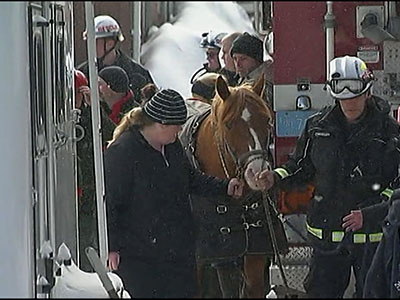 Raw: 15 horses rescued after barn roof collapse