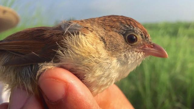 'Extinct' bird isn't extinct at all