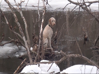Raw: Dog rescued from ice on Charles River