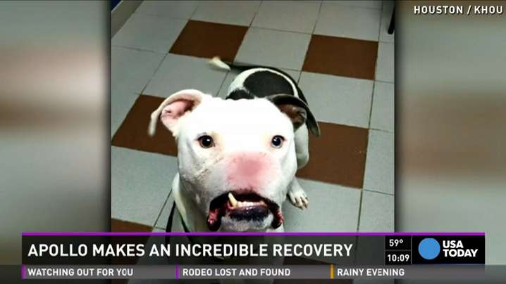 Dog missing half his face undergoes surgery