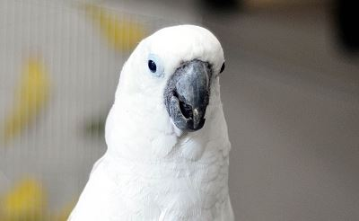 Parrot calls for help in 'woman's voice' during house fire