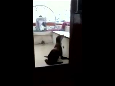 Sea lion tries bunking with San Diego boat owner