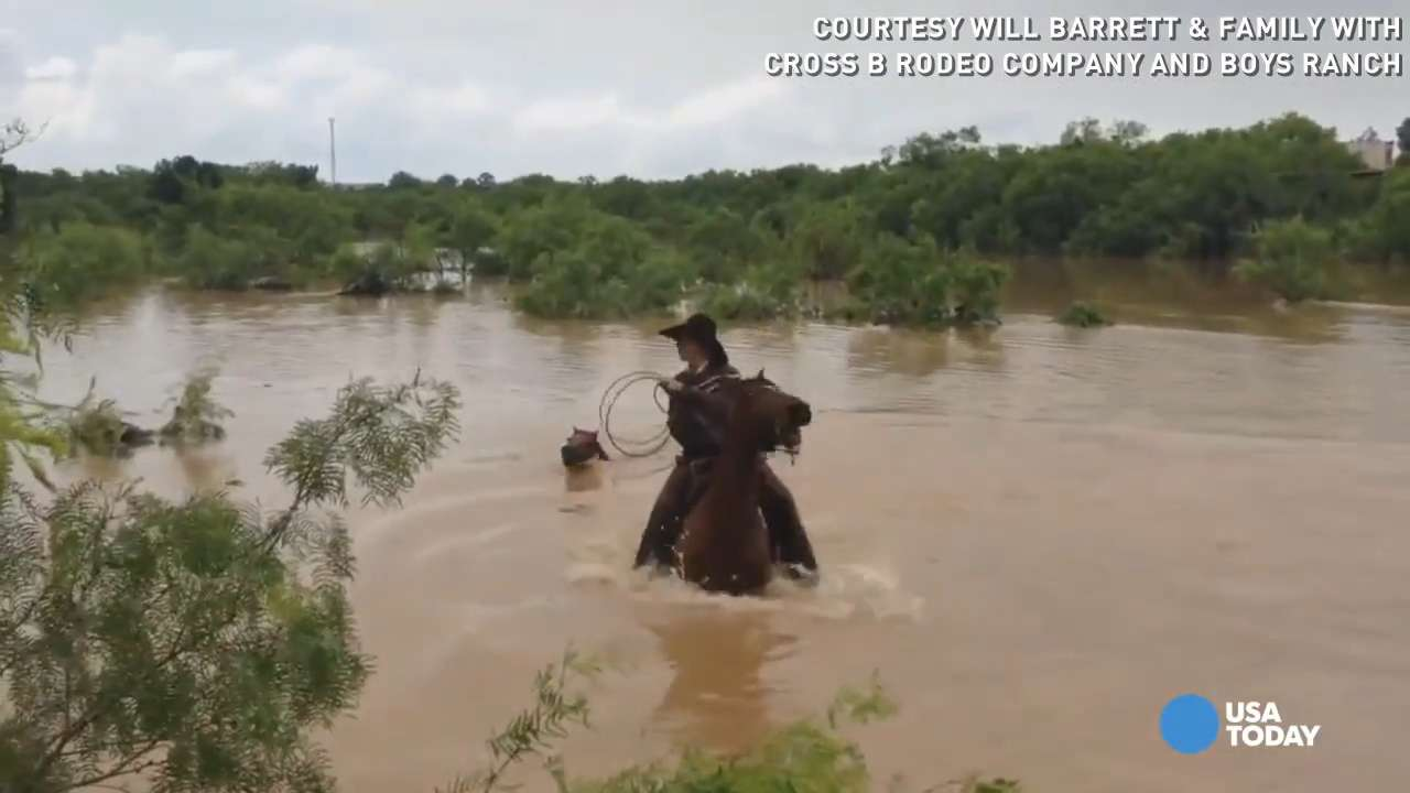 Yee-haw! Watch these cowboys save horses from drowning