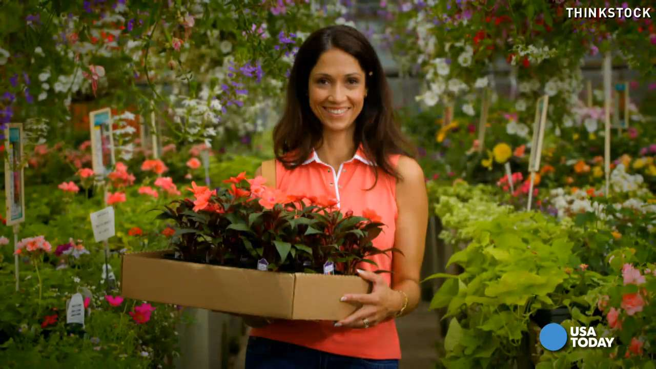 Great lawn and garden deals spring up in unlikely place