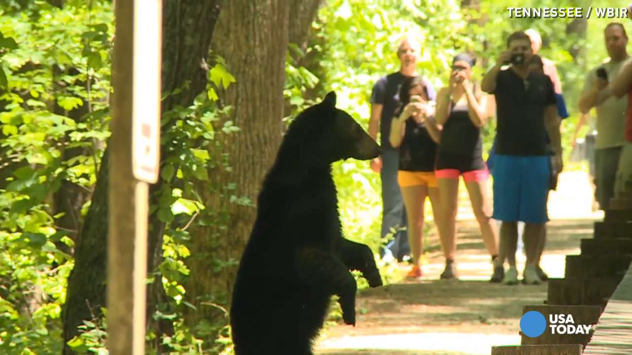 Mama bear keeps cub close as onlookers gather