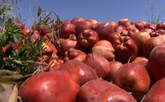 Huge apple dump site makes WA town smell like 'rancid fruit'