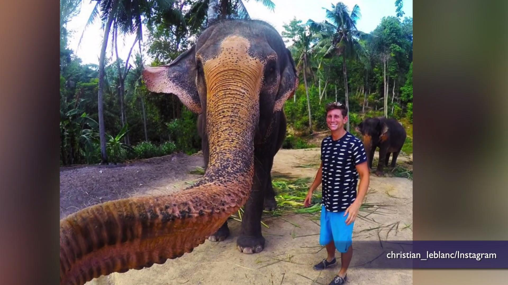 Elephant grabs tourist's GoPro and takes world's first 'elfie'
