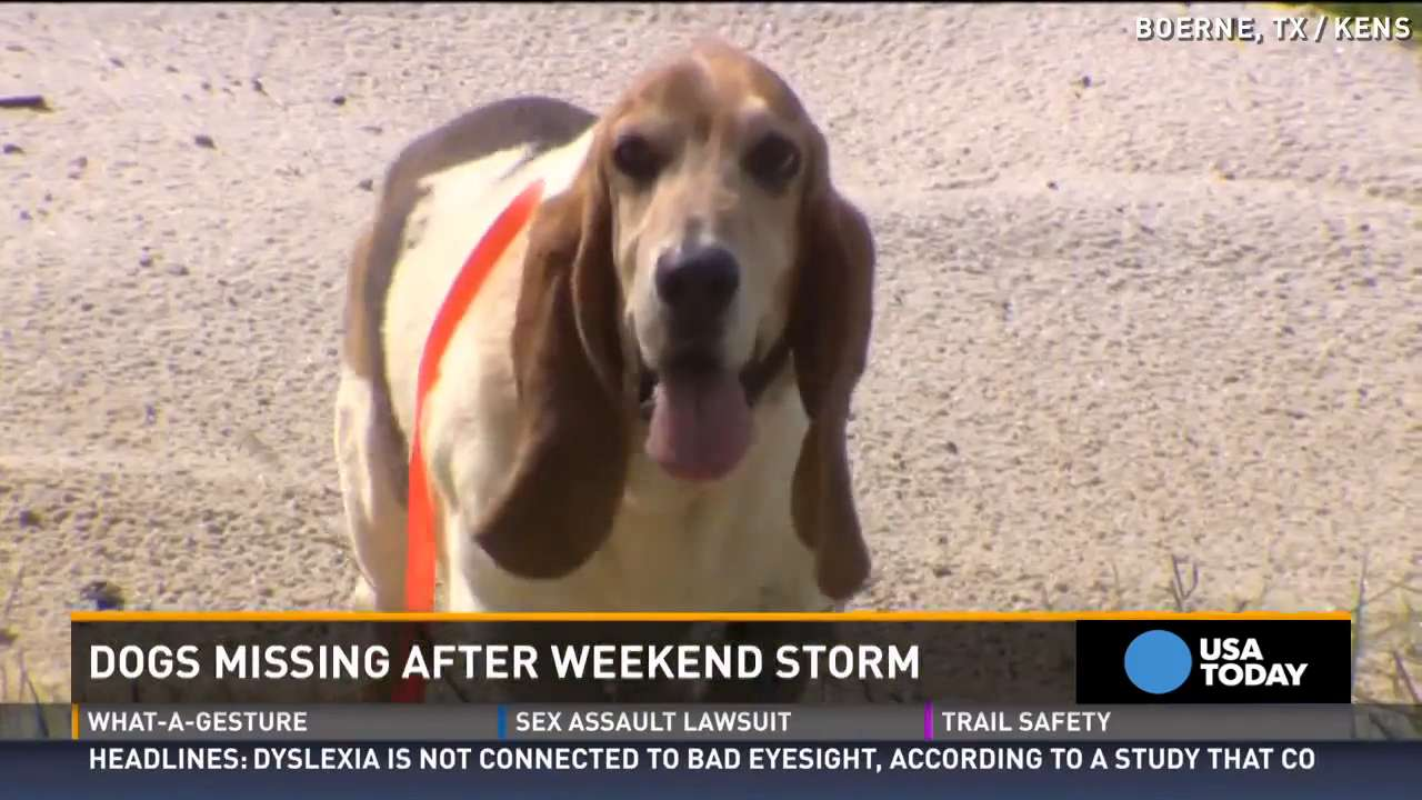 Hope after Texas storms to reunite lost pets and owners