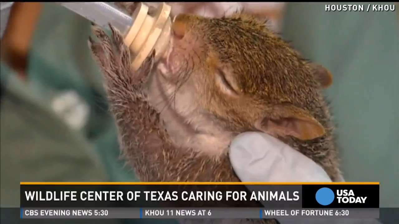 Baby animals displaced by flood cared for